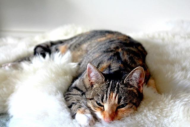cat-1127194_640