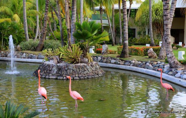 Flamingos at Paradisus Punta Cana