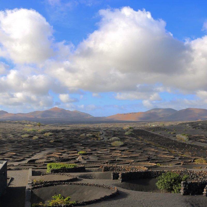 isole canarie Lanzarote - La Geria