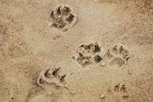 Vacanze in emilia romagna con il cane