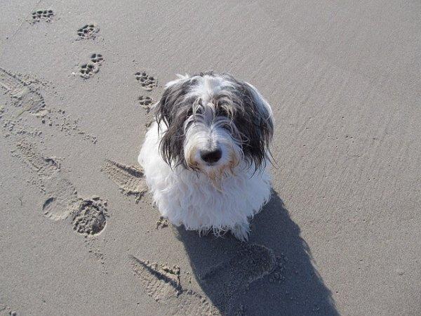vacanze con il cane in emilia romagna