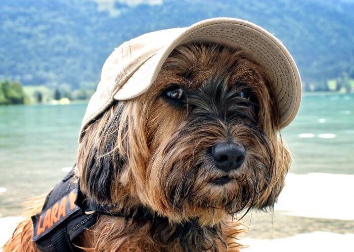 Vacanze con animali in emilia romagna