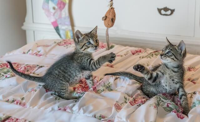 giochi per gatti topino